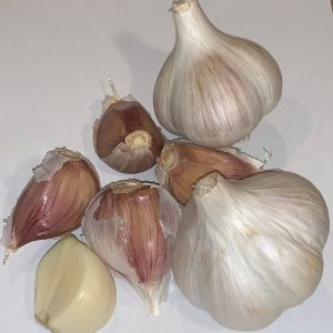 CCOF Certified USDA Organic Music Garlic - Basaltic Farms